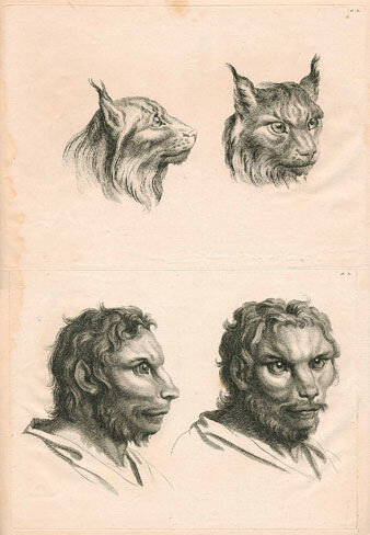 Physiognomies from Le Brun's System