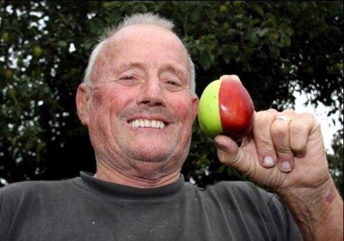 Половина плода красная, половина - зеленая.  Кен сам очень удивлен.
