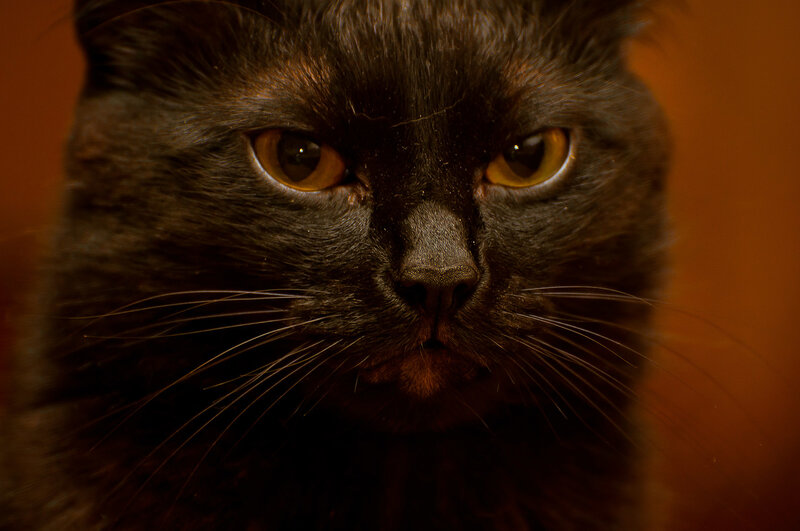 Наглая кошачья морда фото 546-329
