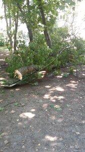 На детскую площадку в Бельцах рухнуло дерево - пострадавших нет