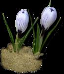 весенние цветы (28).png