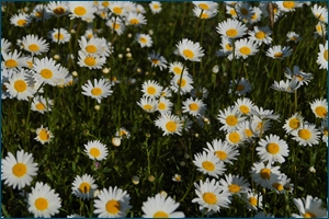 http://img-fotki.yandex.ru/get/4802/15842935.fb/0_ce84f_afd128a3_orig.jpg
