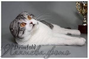 Лаптева-фото - Фотографии животных для питомников и заводчиков - Страница 4 0_1254cf_91ff512b_M
