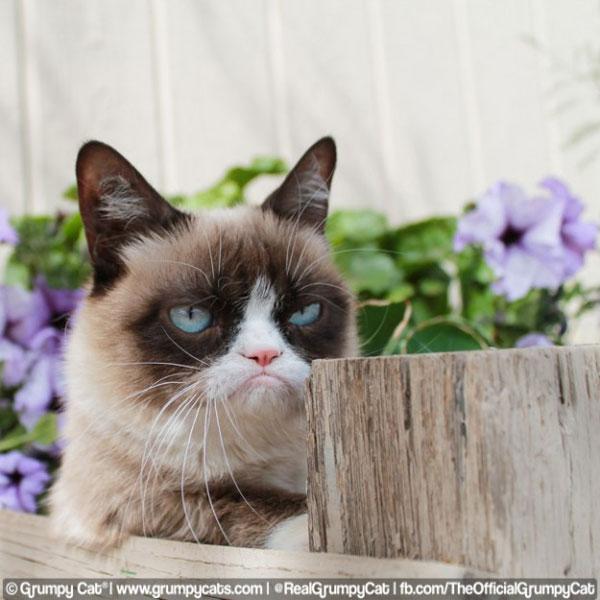grumpy2.jpg