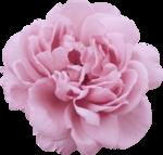 bee_floral_el1.PNG