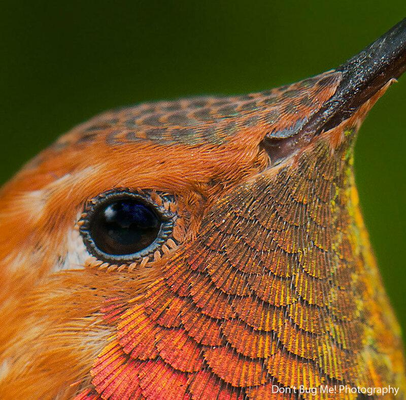 colibri-05.jpg