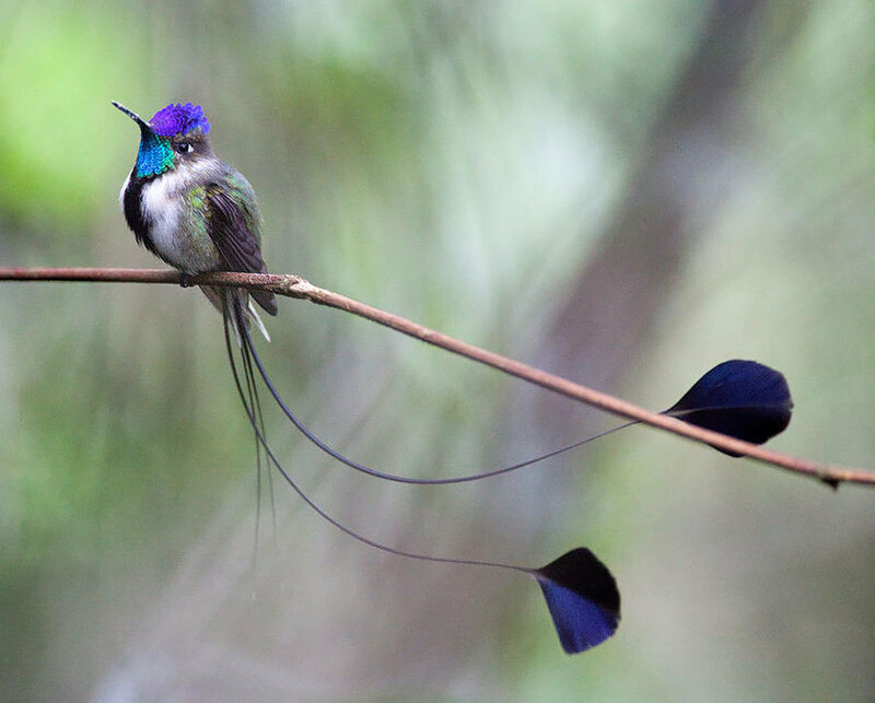 colibri-06.jpg