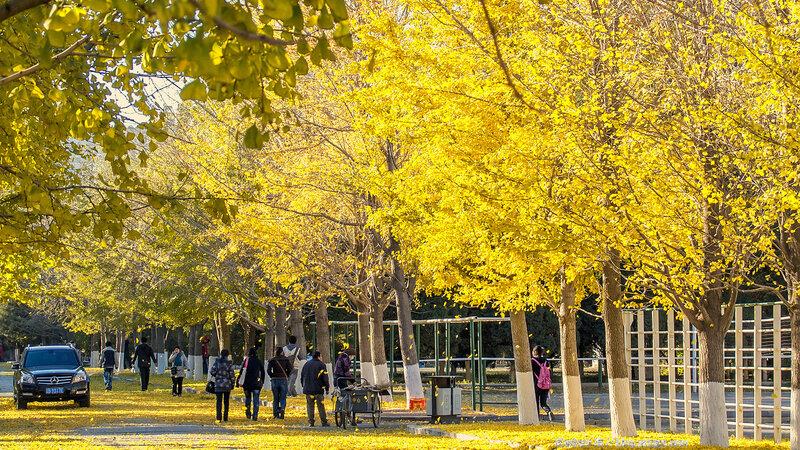 Золотая осень в Шэньяне, 2010 г.