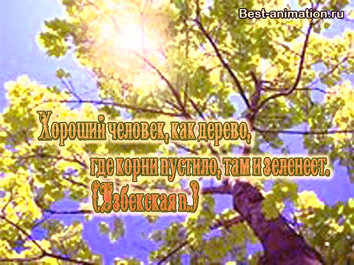 Цитаты великих людей - Величие и ничтожество человека - Хороший человек, как дерево...
