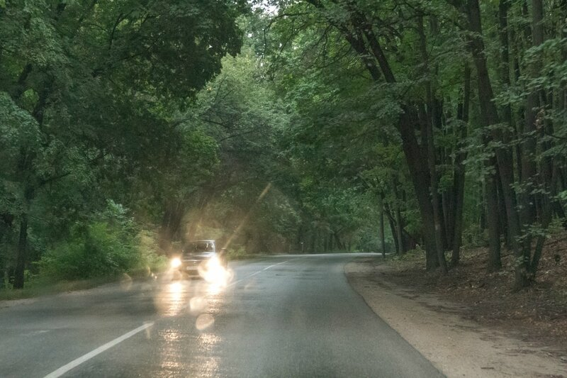 Дорога в лесу, Жигулевский заповедник