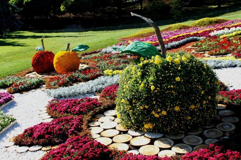 Выставка хризантем на Певческом поле