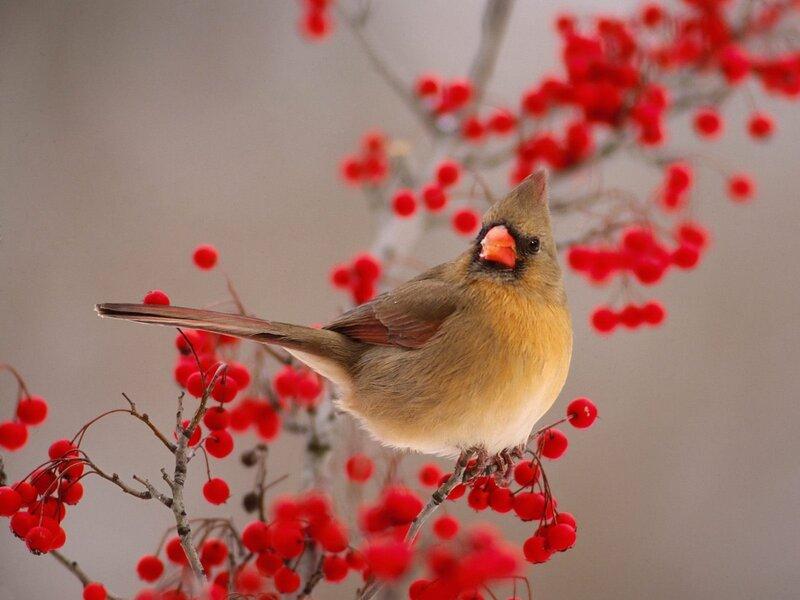 Волшебные птицы (45 отличных фото на рабочий стол) 0 312b6 aa257b57 XL