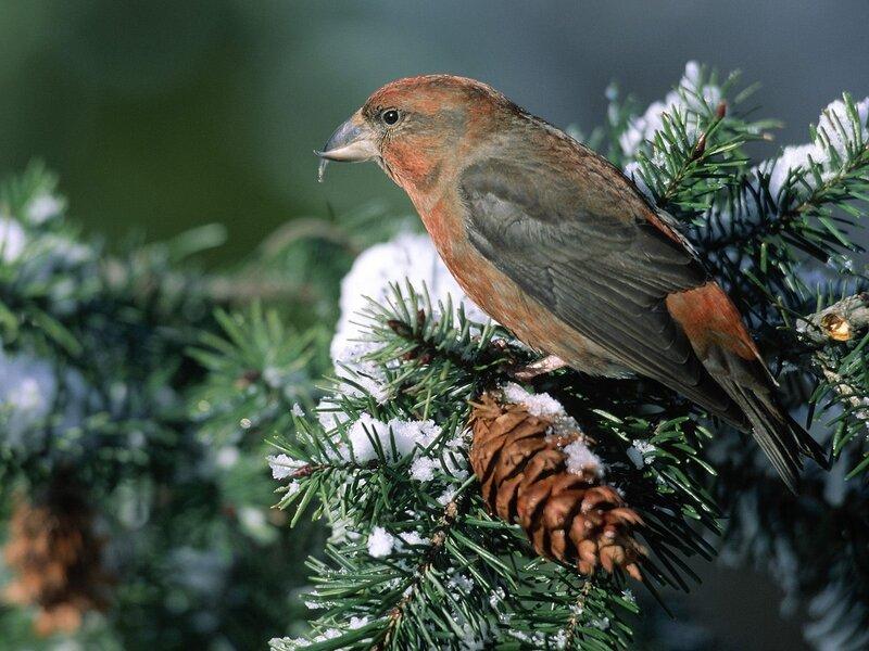 Волшебные птицы (45 отличных фото на рабочий стол) 0 312be 72cb77a8 XL