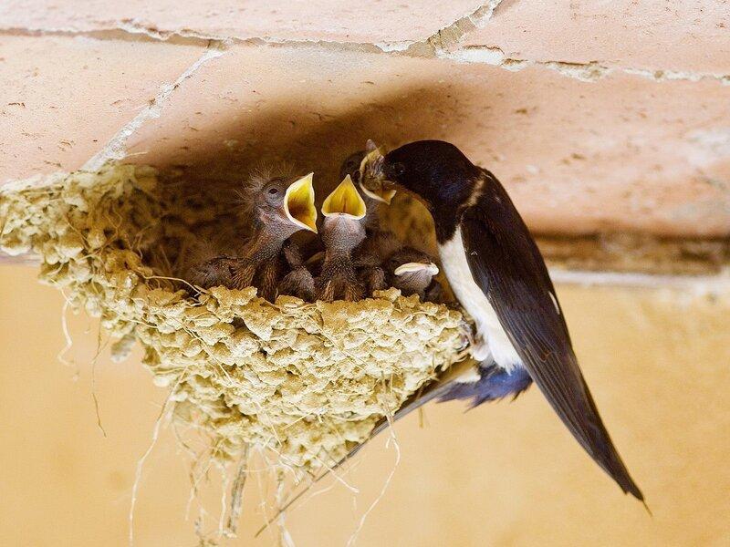 Волшебные птицы (45 отличных фото на рабочий стол) 0 312bf 7072d52 XL