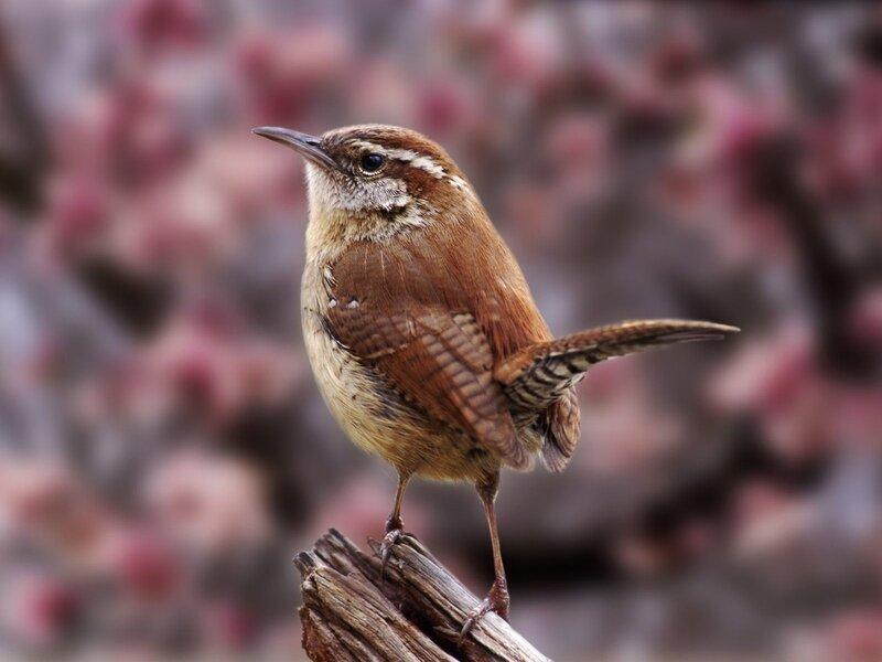 Волшебные птицы (45 отличных фото на рабочий стол) 0 312c0 dd22d912 XL