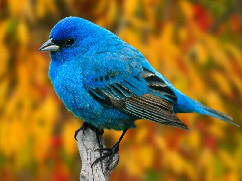 Волшебные птицы (45 отличных фото на рабочий стол) 0 312c4 85fb9207 XL