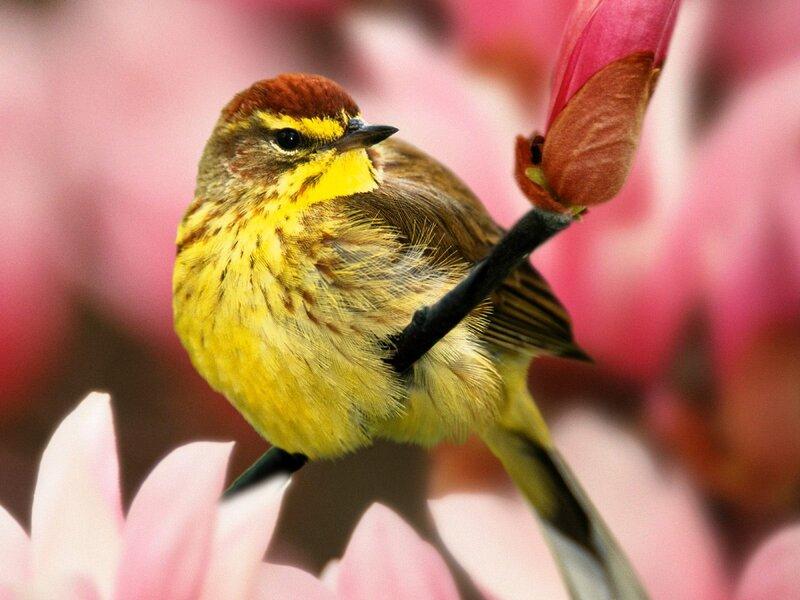Волшебные птицы (45 отличных фото на рабочий стол) 0 312c8 379af444 XL