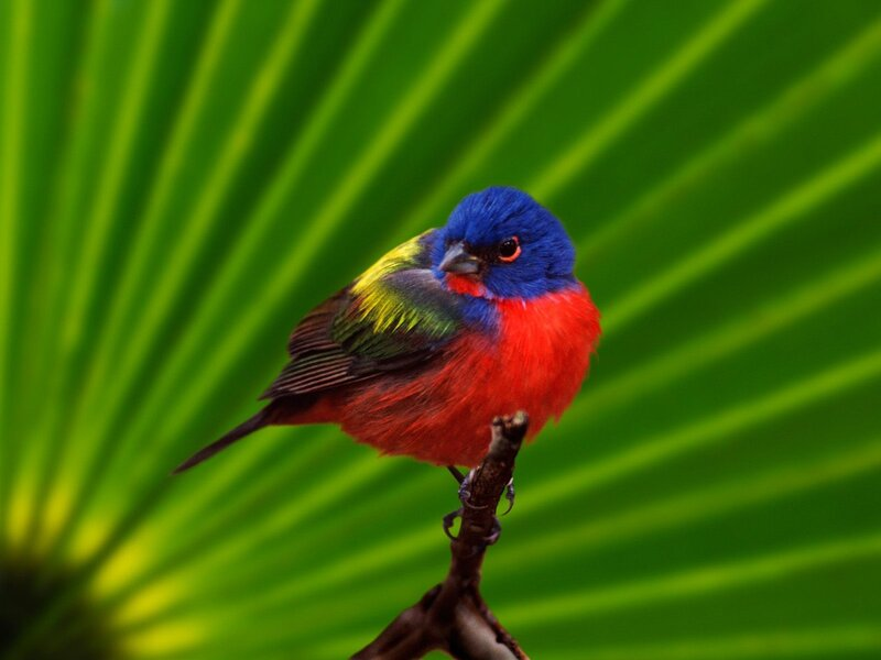 Волшебные птицы (45 отличных фото на рабочий стол) 0 312d2 4584f7e9 XL