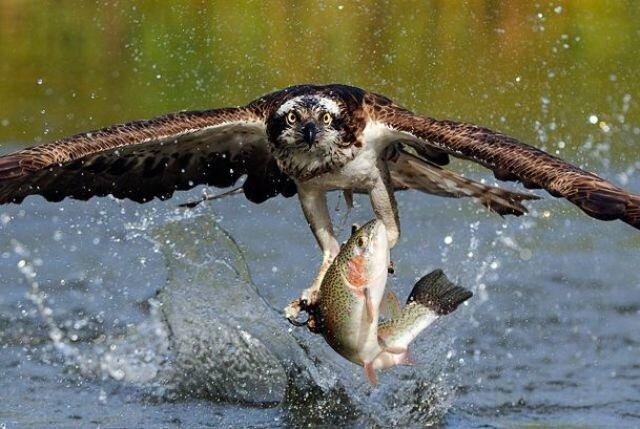 Удивительные высокоскоростные фото Скотта Линстеда