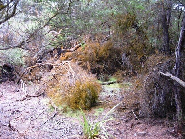 Лес в Новой Зеландии вокруг термальных полей