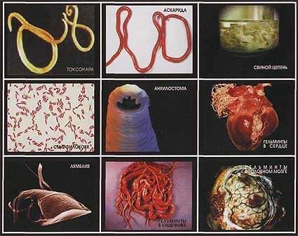 аюрведа от паразитов препараты