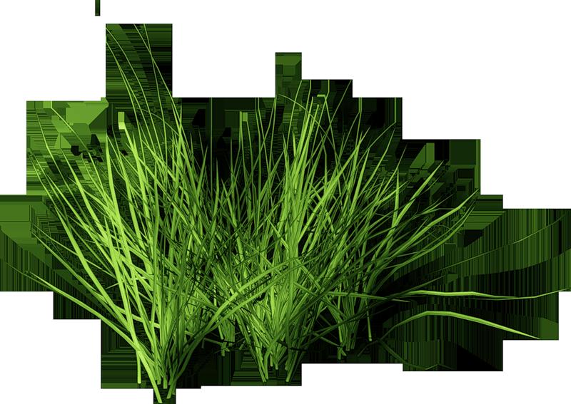 grass (5).png