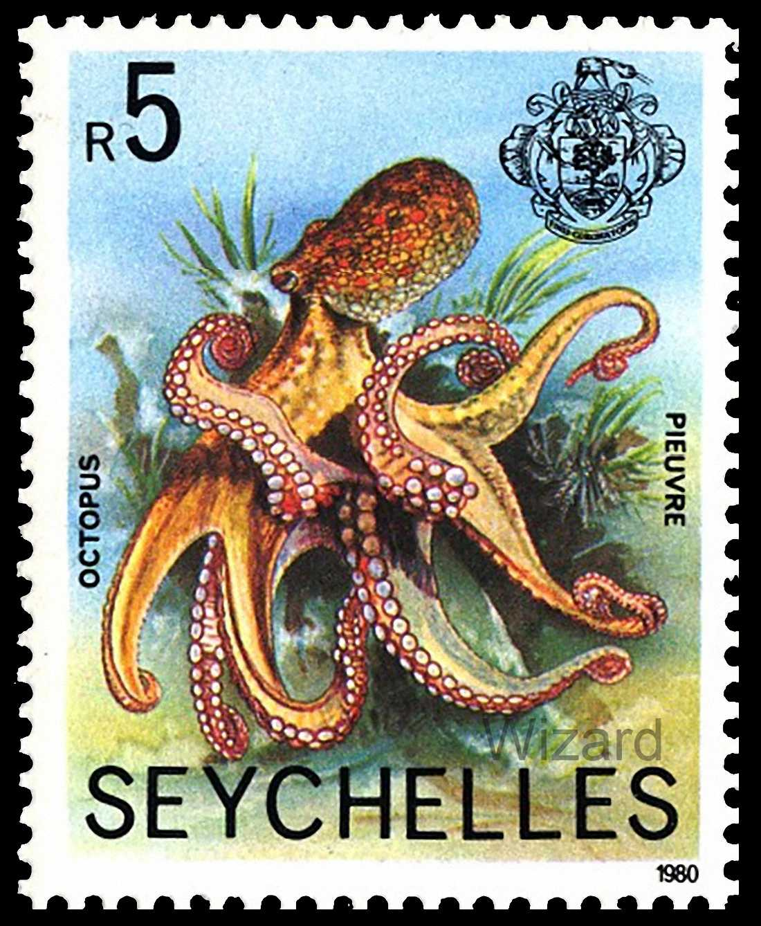 an introduction to polyplacophora and cephalopoda