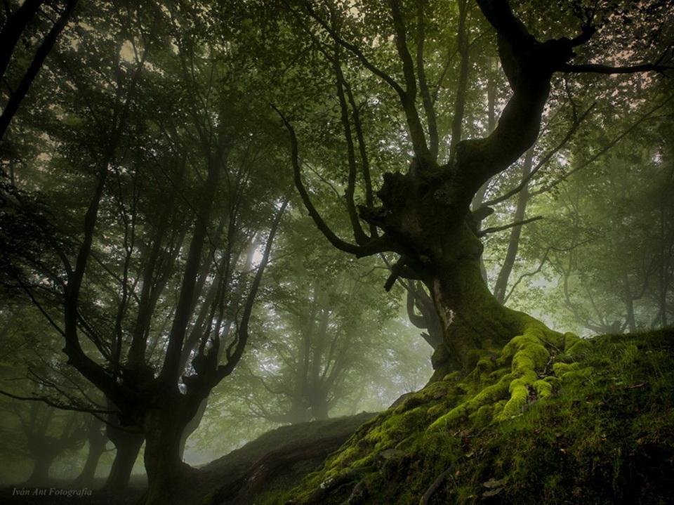 Фильм дерево