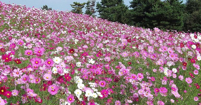 Живописный японский парк Хитати Кайхин 0 1422e9 9520a785 orig