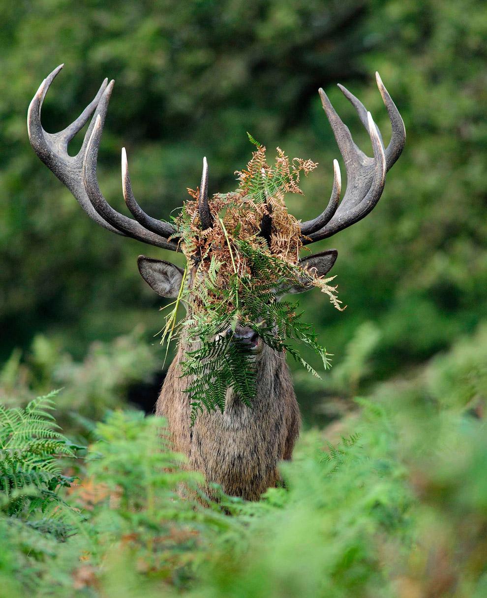4. Шеф, поддай газу за той газелью. (Фото Marc Mol | Comedy Wildlife Photography Awards):