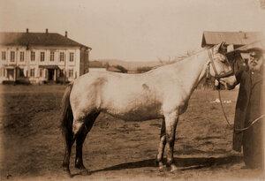 Кобылица местной породы (мать жеребчика Дорогого) И. С. Иконникова.