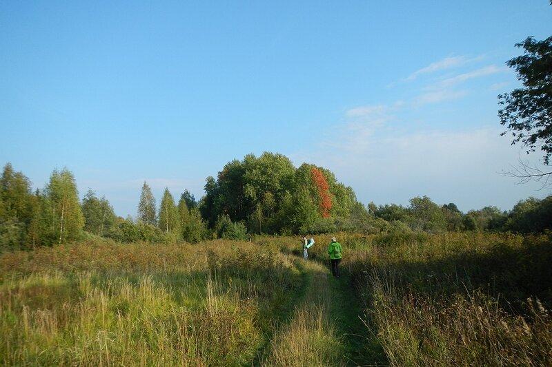 Красная полоска осинки в купе деревьев и полевая дорога