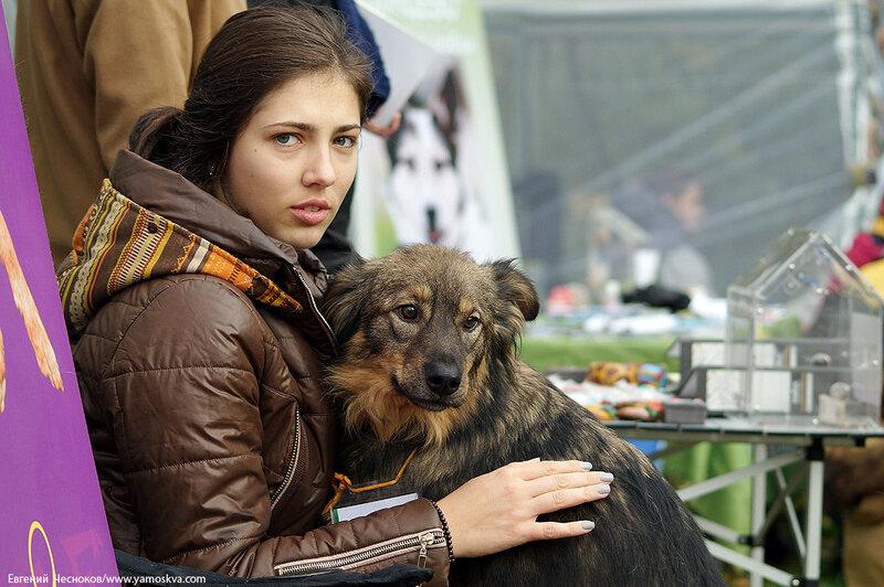 Осень. Фестивальный парк. Собаки. 04.10.14.08..jpg