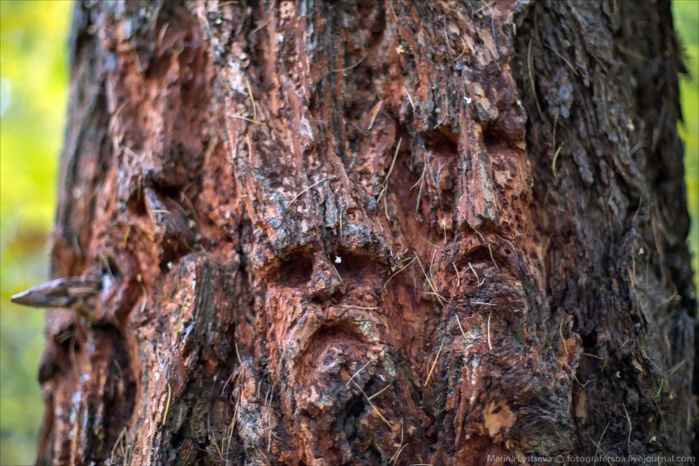 Осенний Бутовский лес