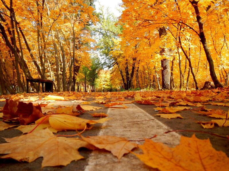 Осень золотая ходит по дорожкам...