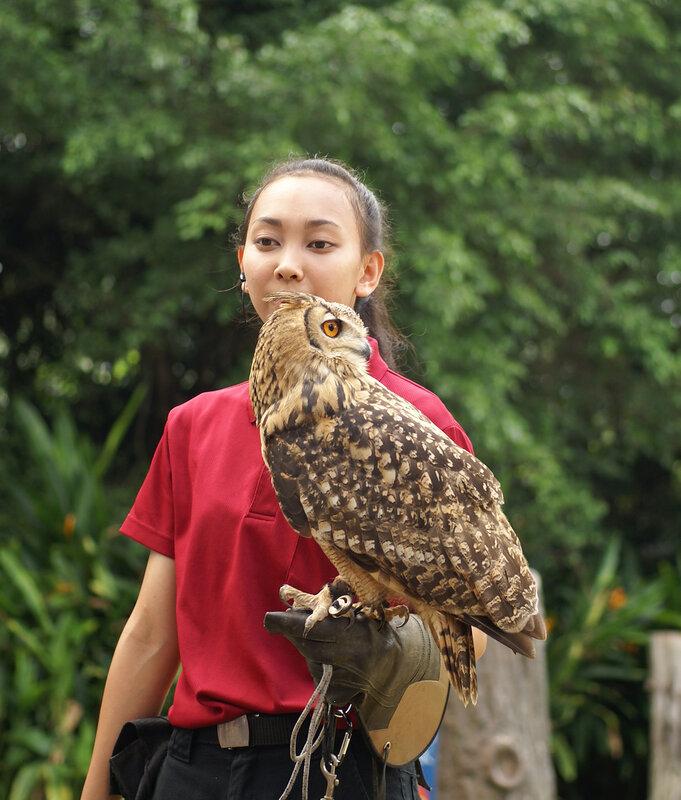 Шоу хищных птиц в парке птиц Синагпура