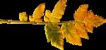 Lilas_Shiny-season_elmt (108).png