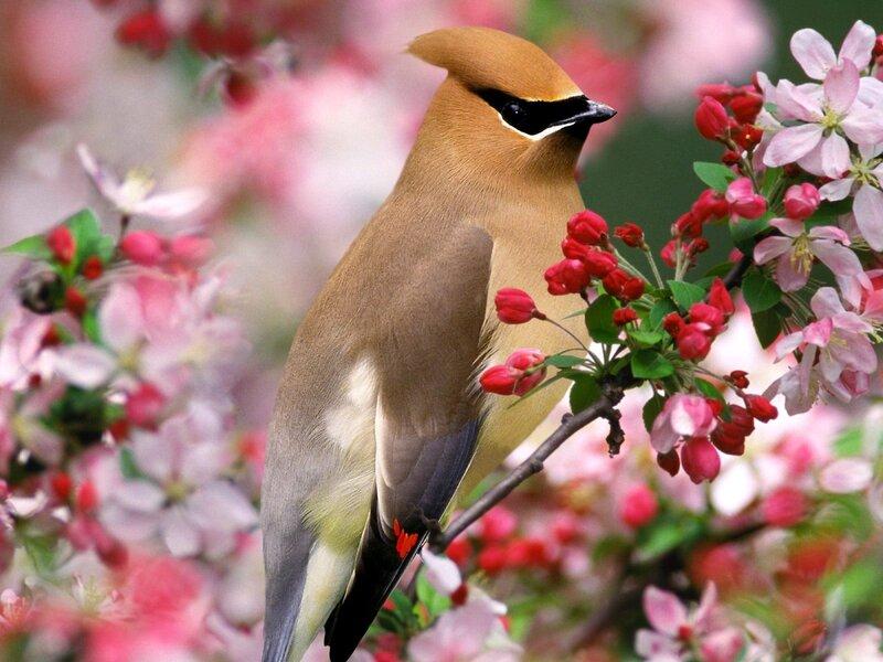 Волшебные птицы (45 отличных фото на рабочий стол) 0 312af d669dce0 XL