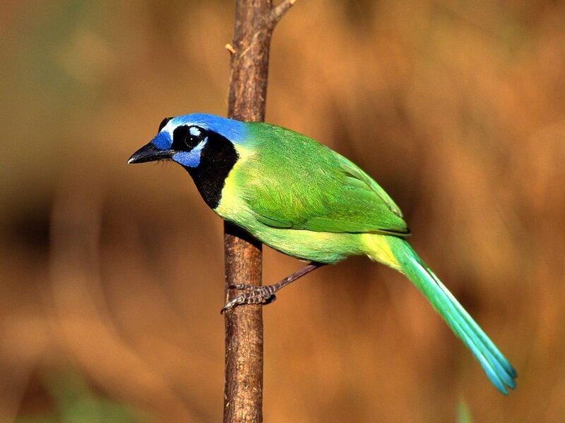 Волшебные птицы (45 отличных фото на рабочий стол) 0 312b2 139592e3 XL