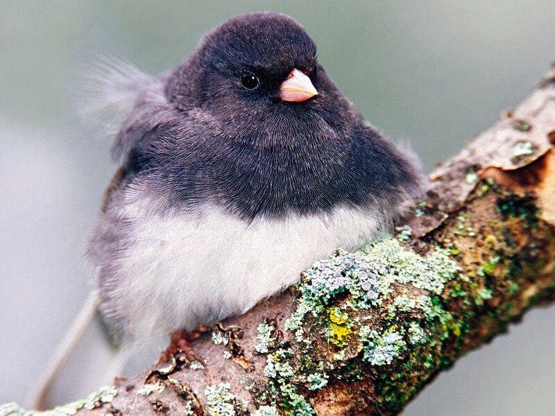 Волшебные птицы (45 отличных фото на рабочий стол) 0 312c2 26ed4a21 XL
