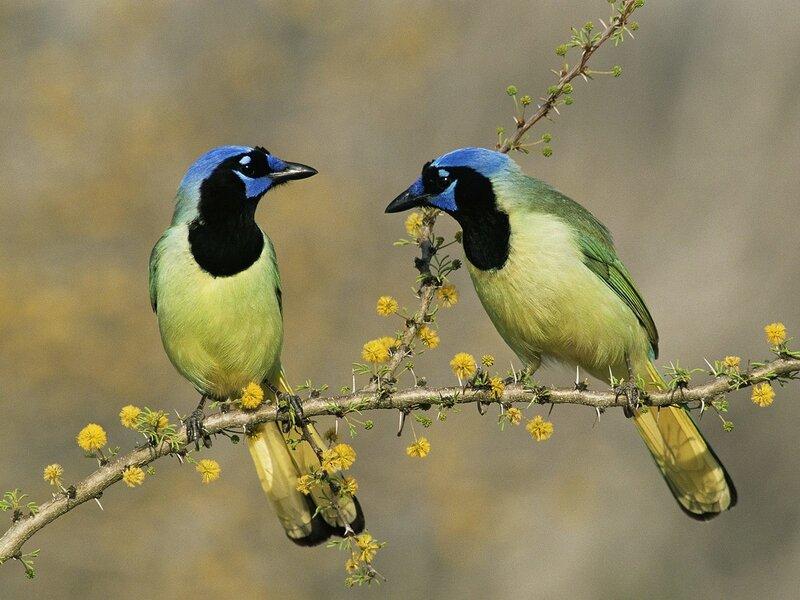 Волшебные птицы (45 отличных фото на рабочий стол) 0 312c3 3798a9a9 XL