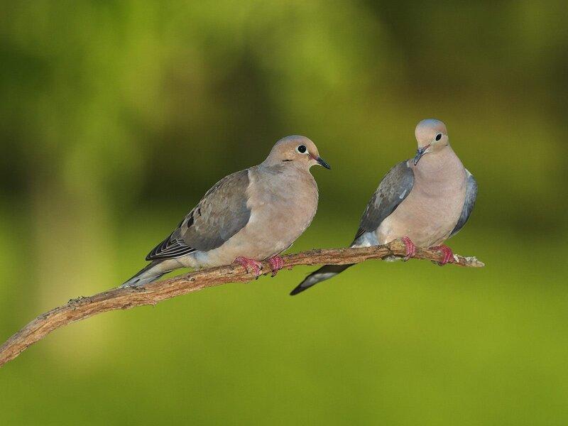Волшебные птицы (45 отличных фото на рабочий стол) 0 312c5 8c3a3b5f XL