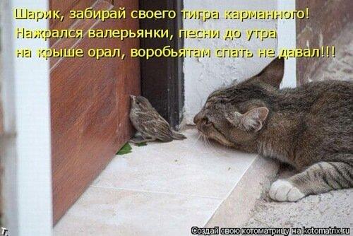 http://img-fotki.yandex.ru/get/4803/c-olia2009.d/0_3a90f_92137b3a_L.jpg