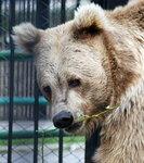 про медведей..