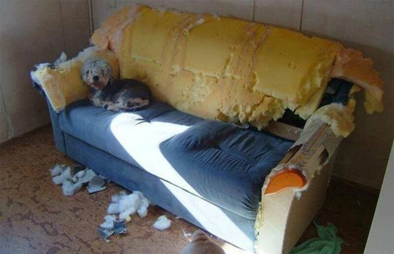 Cats & Kids - страшнейшее стихийное бедствие