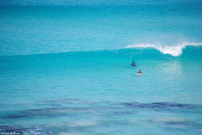 Фото: нападение белых акул на пляжи Западной Австралии 0 10f9b4 d91d59d4 orig