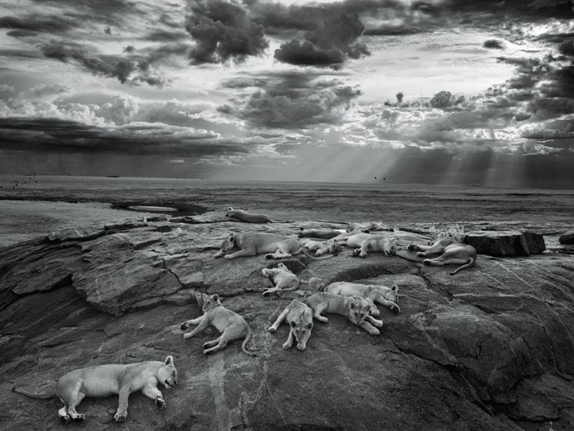 Победители конкурса фотографий дикой природы 0 12f898 1cb24367 orig