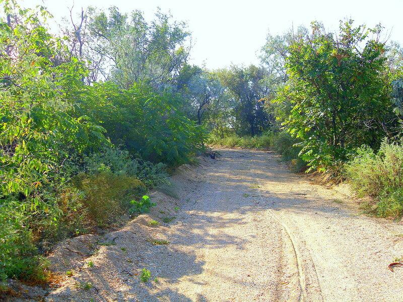 Дорога песчаная в лесу ... SDC14774.JPG