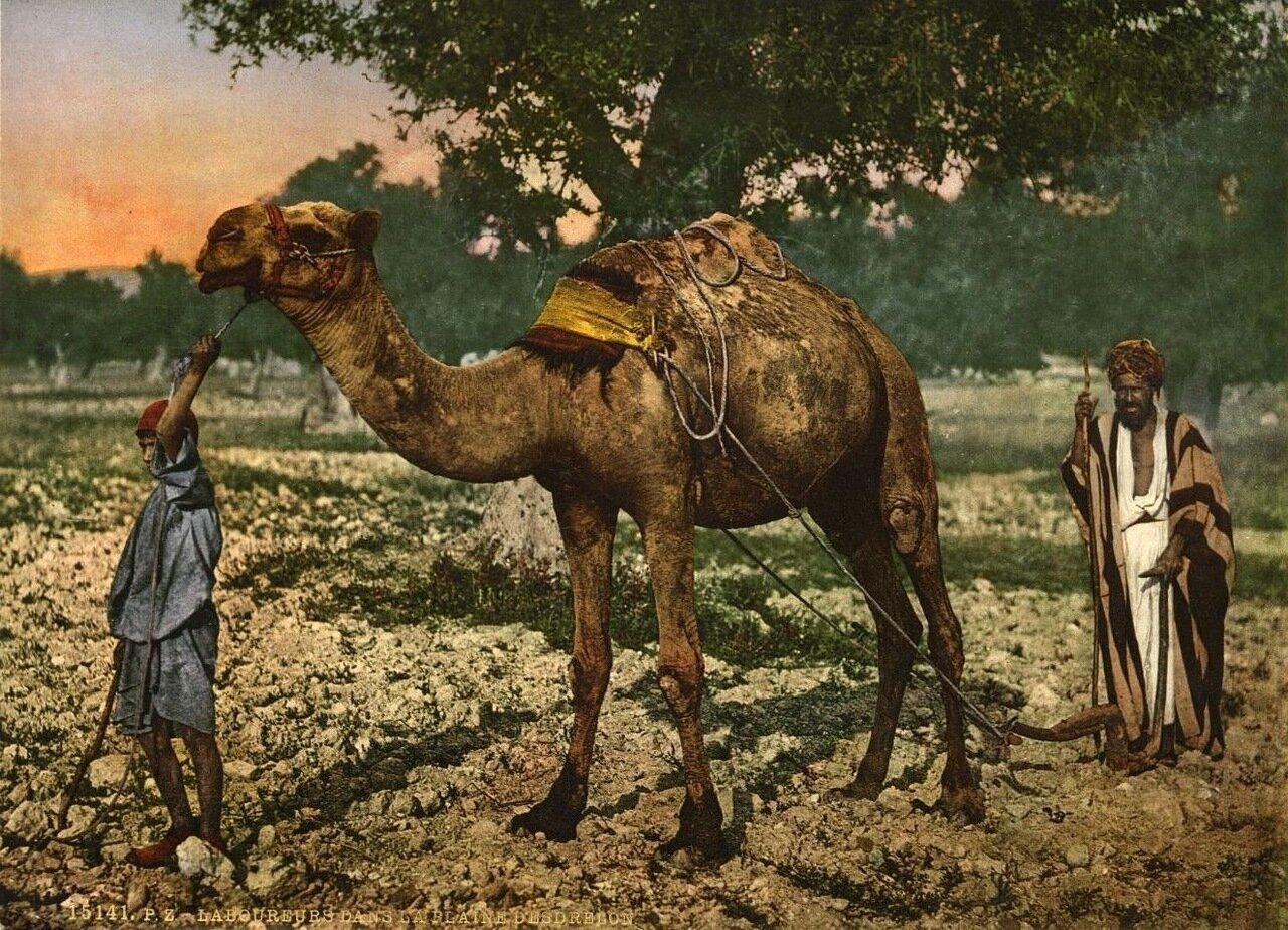Рабочие в Изреельской долине