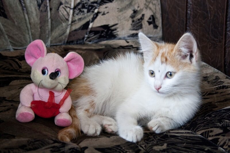 Люська и мышь:)